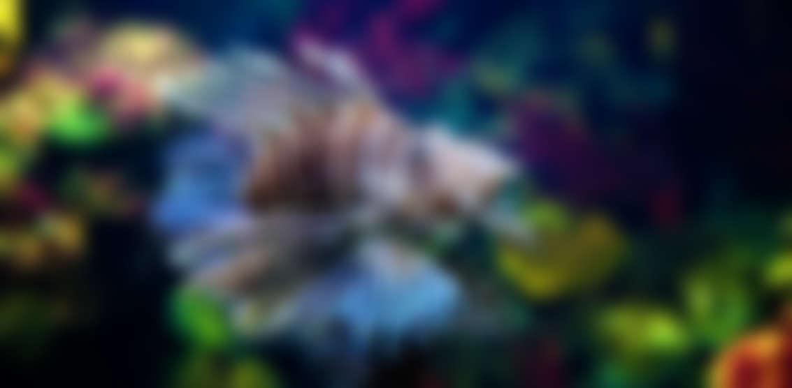 img28 - Deep Diving
