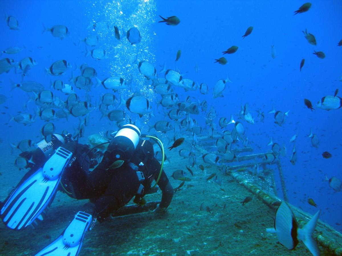 DSC03156 1 - Diving & Cyprus Underwater World | ABC DIVE