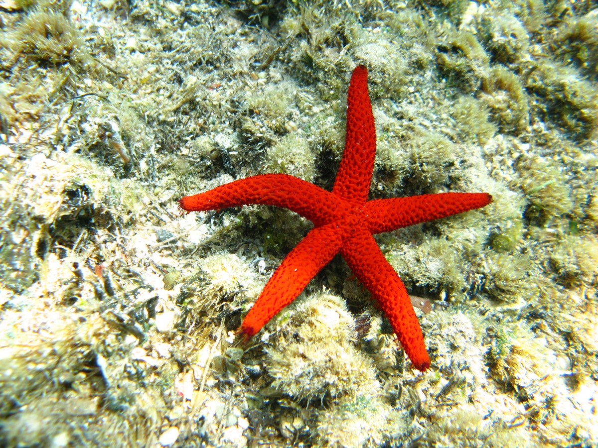 Sea Star diving in Paphos - Diving & Cyprus Underwater World | ABC DIVE